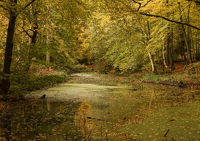 Camlet Moat