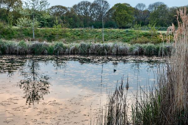 Firs Farm Wetlands-2414