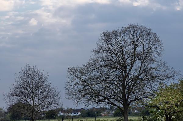 Trees, Firs Farm