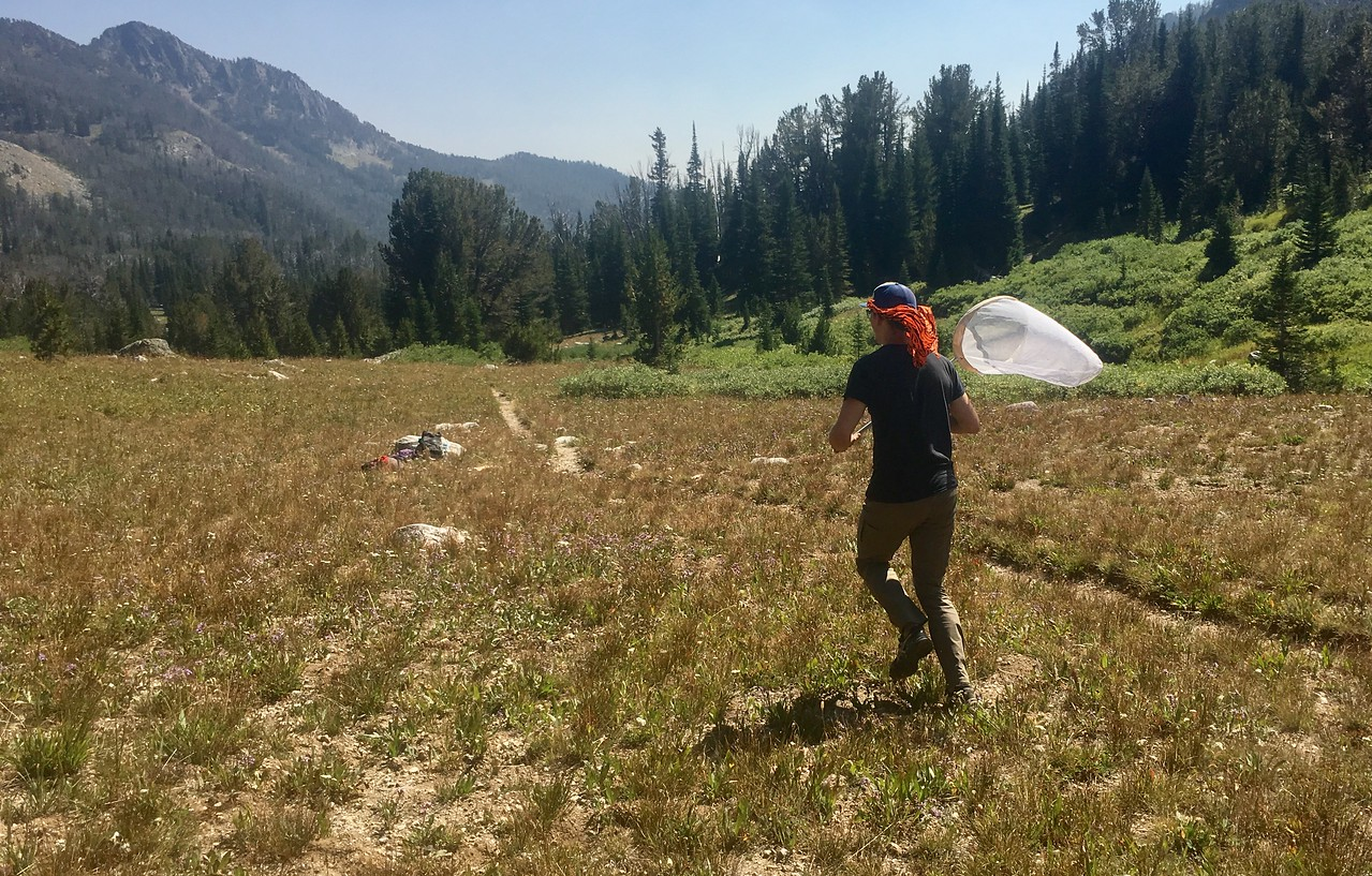 Keep running for butterflies, Bear Basin, Montana PC: Emma Bode
