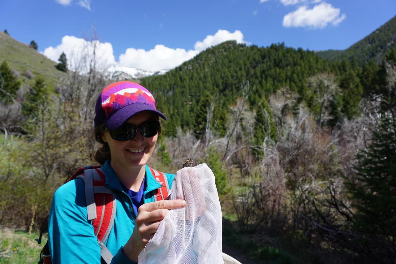 Michelle testing pollinator protocols
