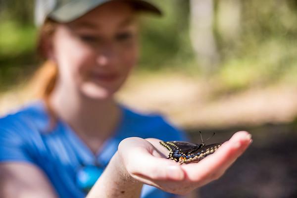 Devon Quick holds a Black Swallowtail butterfly at Mt. Wrightson, Arizona 2 PC: Zac Velarde