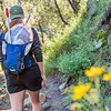 Devon Quick hikes to a field site at Mt. Wrighton, Arizona PC: Zac Velarde