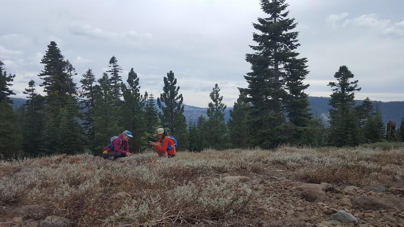 Collecting plant phenology data, volunteers Lori Solem and Anya Starovoytov, PC: Anya Starovoytov
