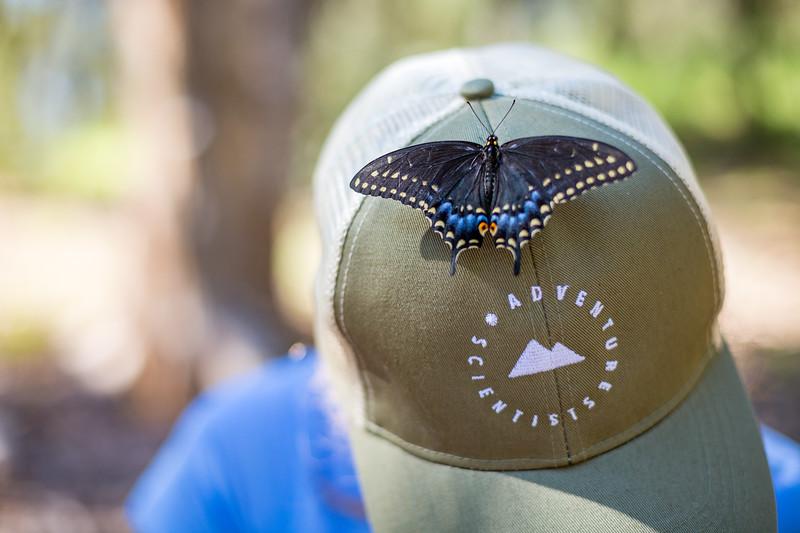 Black swallowtail lands on Devon Quick's hat PC: Zac Velarde