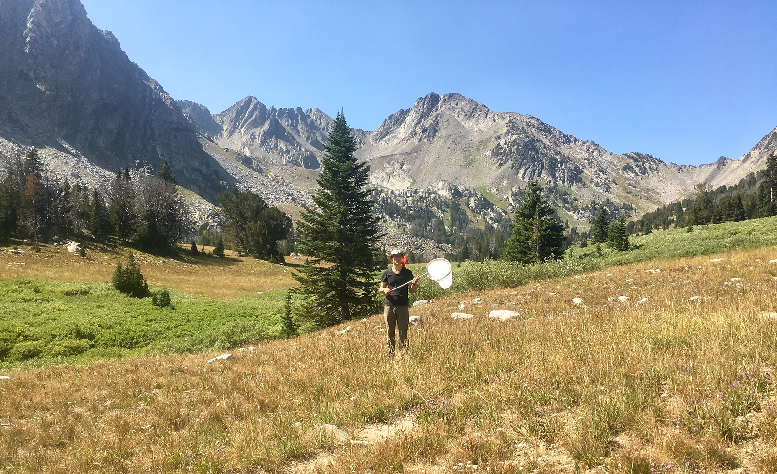 Searching for butterflies in Bear Basin, Montana PC: Emma Bode