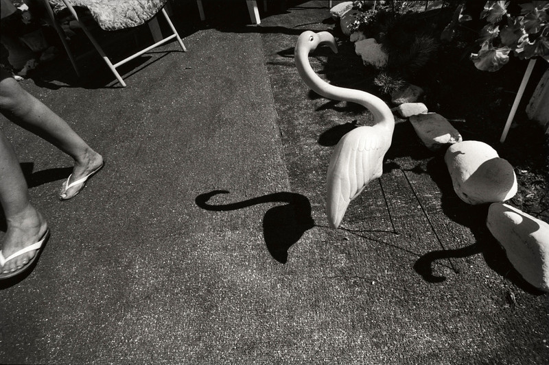 Garden Flamingo. Santa Fe, New Mexico. 2003.