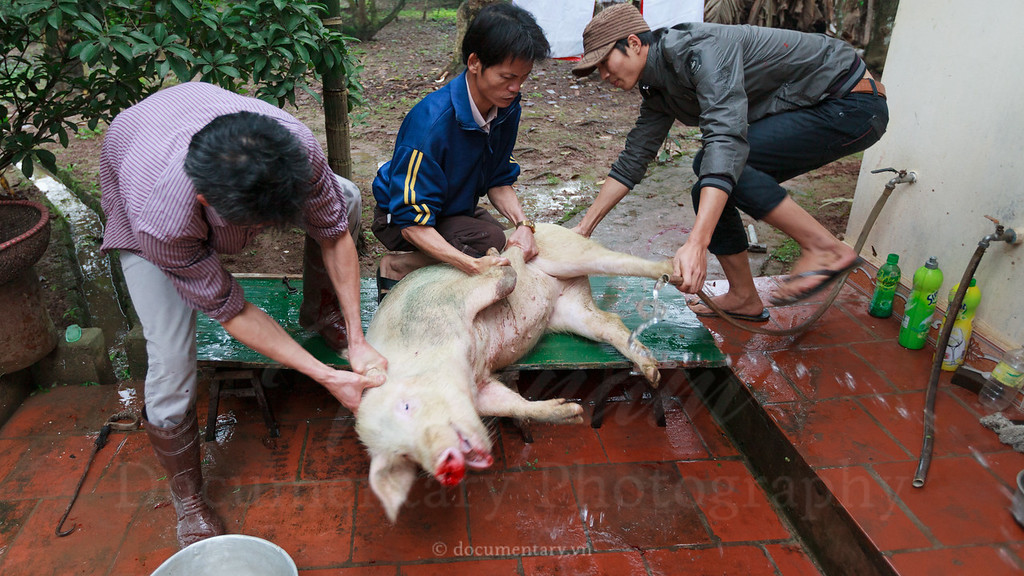 Killing a pig