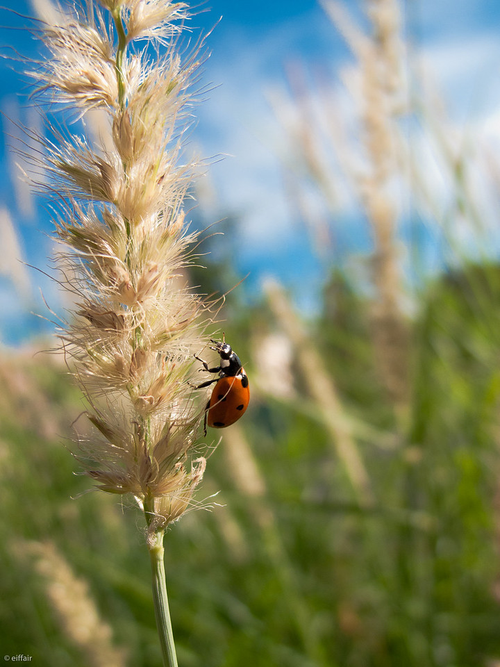209 - Ladybird in the City