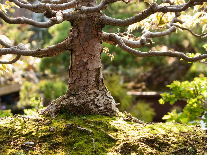 100 - Hobbit Tree