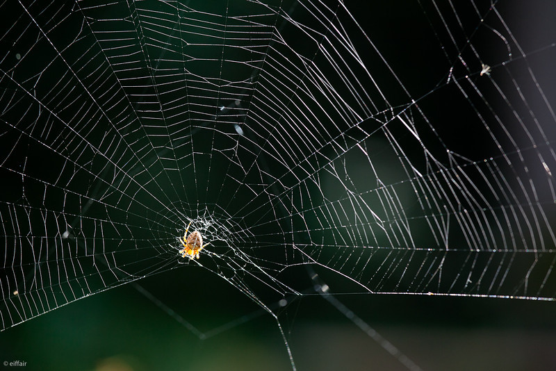254 - Spider