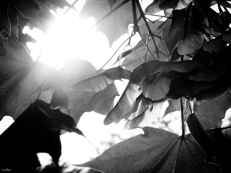 165 - Shadows and Light