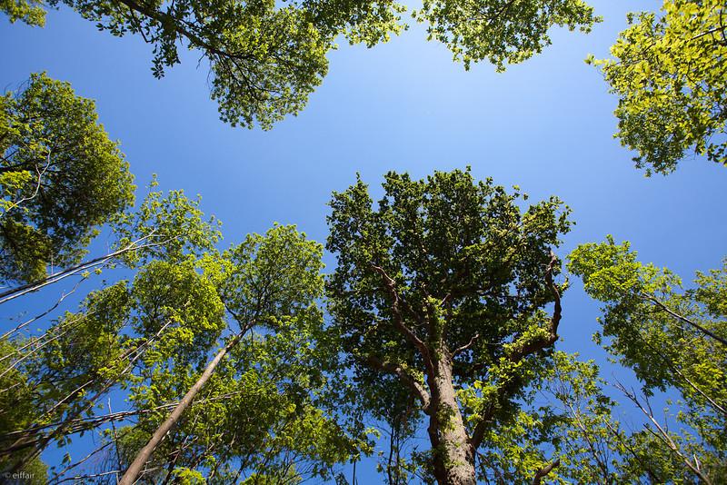 143 - Forêt de Montmorency