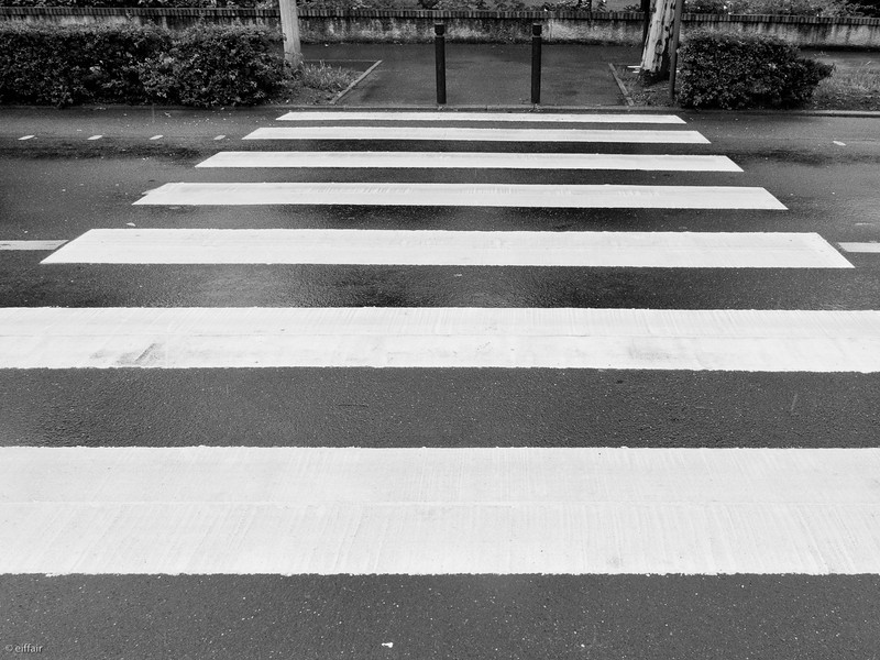 160 - Zebra