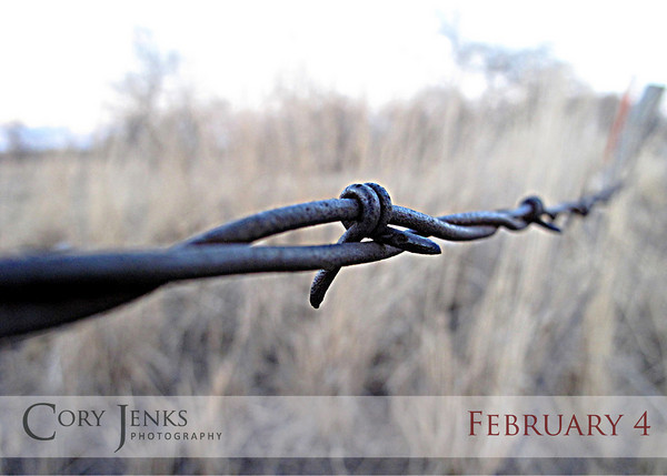 Project 365: February 4 - Barbed. When posts and wire just aren't enough, we give you barbed wire. Some seem to think it makes a great tattoo as well.