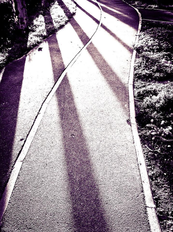 295 - Zebra Crossing