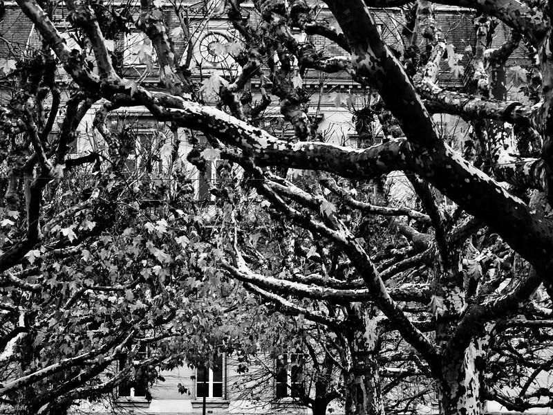 329 - Black Trees