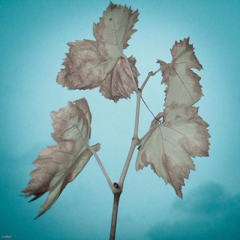 310 - Just Leaves