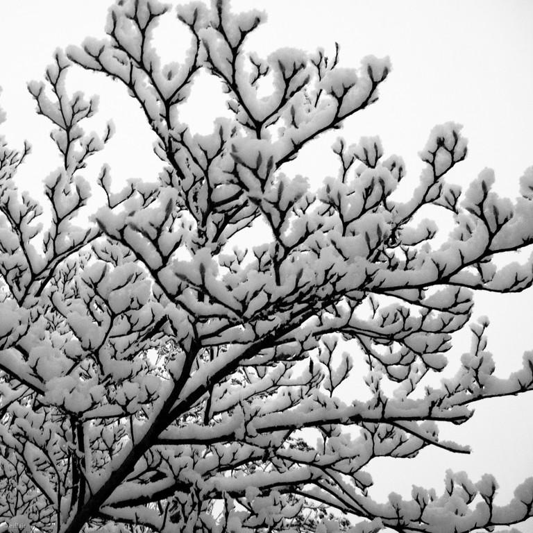 354 - Snow, snow, snow