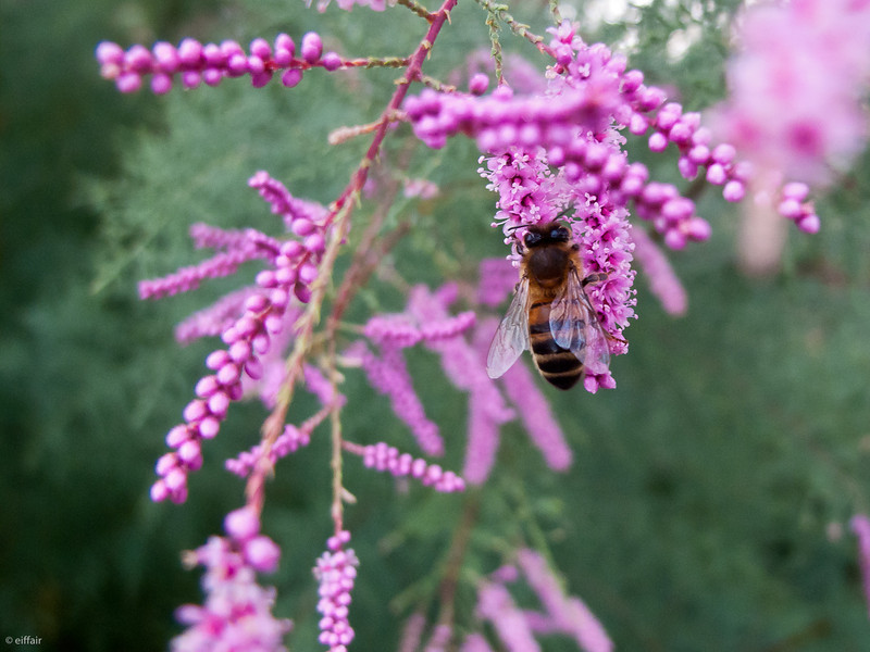 253 - Bee