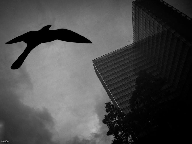 318 - Black Bird