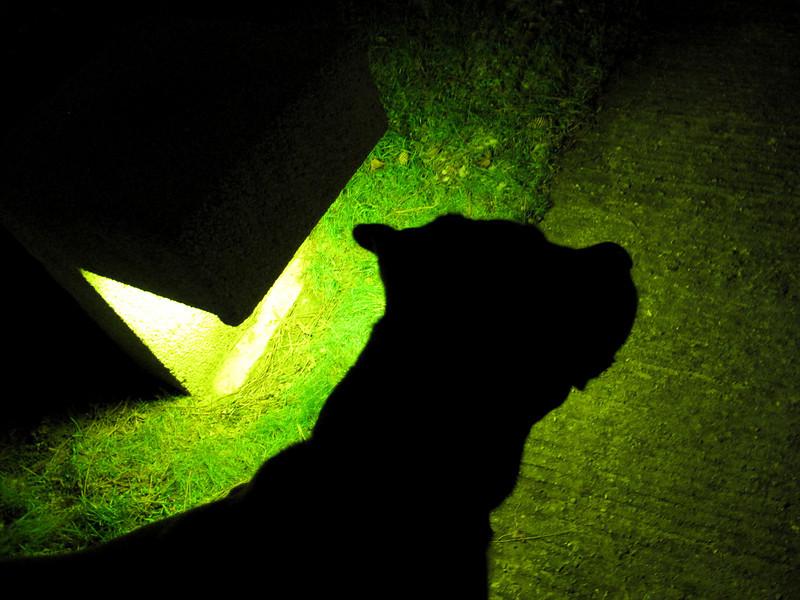 012 - Green Dog
