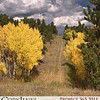 Project 365: October 2 - Aspen Gold. Took a drive up into the mountains along the Peak to Peak highway.