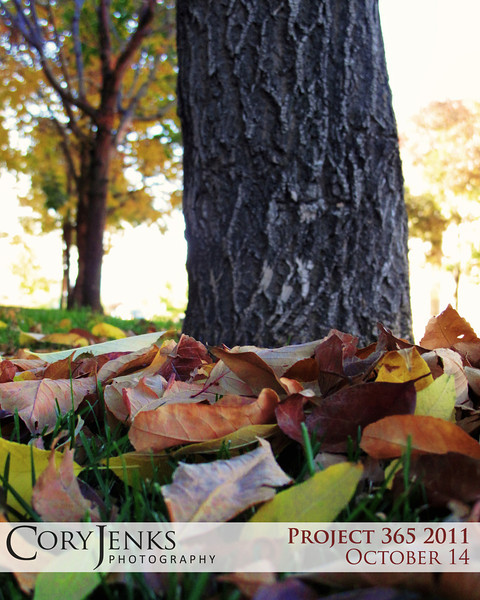 Project 365: October 14 - Fallen Leaves. Sounds like a rock band name, but I love the sounds of fallen leaves onder foot on an Autumn day.