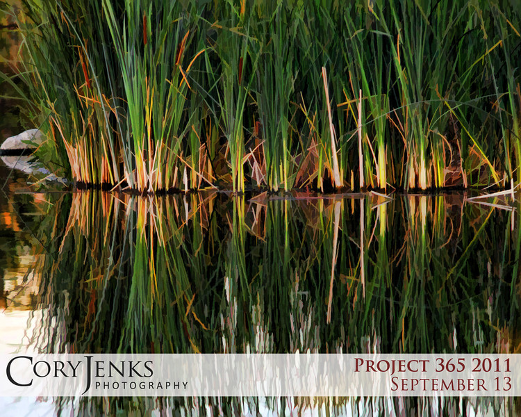 Project 365: September 13 - Pond Art. Sometimes there is beauty in the chaos. A busy went pond full of cattails, but you you stop, look and listen you see all the shades of green and yellows, and if you listen hard enough you can almost hear the bull frogs croak.