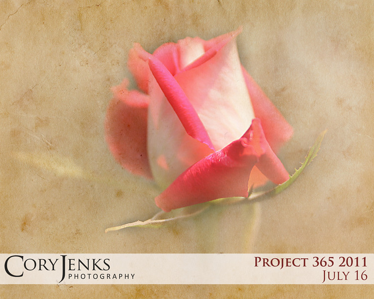 Project 365: July 16 - Vintage Rose. A rose picture with a little photoshop layering and texturing.