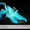 """Project 365: January 23 - Lily Inversion. A photo from the """"Lilies Under Light"""" series taken this morning. Applied the invert tool in photoshop."""