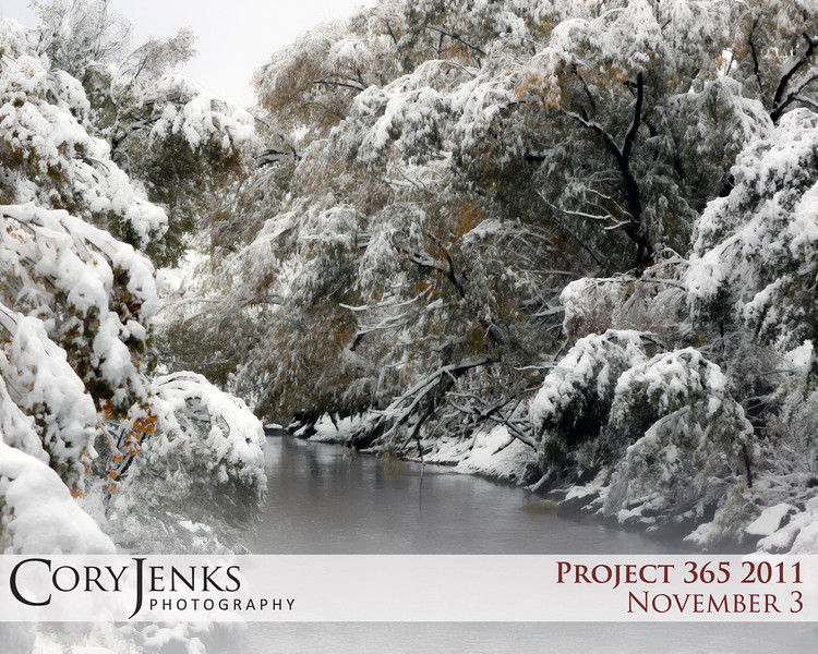 Project 365: November 3 - Winter Stream. Another photo of the latest snow storm; slow moving stream surrounded by the snow covered trees.