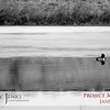 Project 365: January 25 - Lone Duck. The photographer approached the partially frozen pond full of waterfowl. First to fly off were the mallards, next came the geese, only this little guy remained holding tough in his corner of the pond.