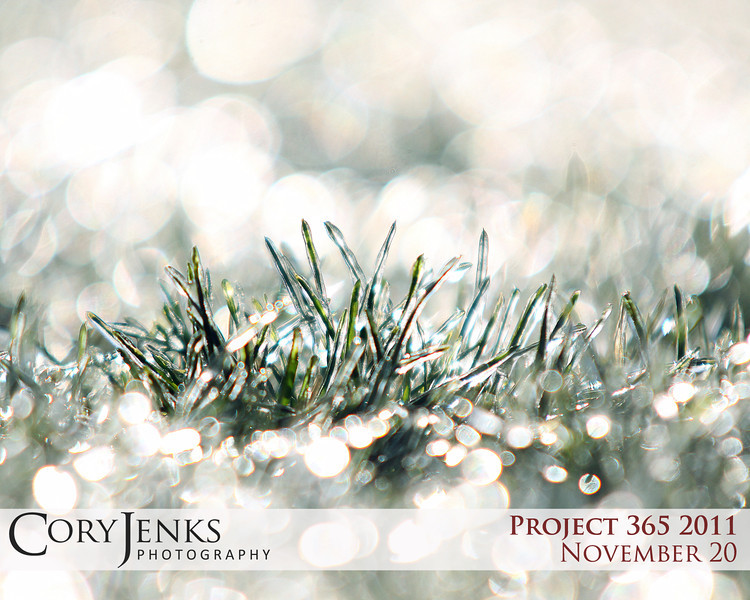 Project 365: November 20 - Frozen Lawn. A sprinkler system run during a below freezing morning and a bright sunrise all photographed with a shallow depth of field.