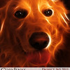 Project 365: November 26 - Kimber. A simple snapshot of my mother-in-law's golden retriever, run through a photoshop plug-in called Fractalius.