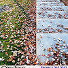 Project 365: November 7 - Under Foot. Distinctive is the sound of Autumn's fallen leaves under foot.