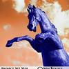 Project 365: October 5 - Blue and Orange. Happy NFL Sunday! Go Broncos!