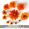 Project 365: September 23 - Bloomolution. The evolution of a flower.