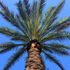 Project 365: August 24 - California Palm Fronds. Spent Wednesday in California on business. I need to venture out of the parking lot on the next trip and take some pictures of iconic LA landmarks. Any suggestions?