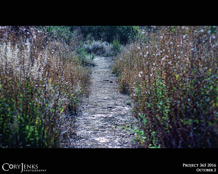"""Project 365"""" October 2 - The Path.<br /> <br /> """"The warrior who trusts his path doesn't need to prove the other is wrong."""" <br /> <br /> ~Paulo Coehlo"""