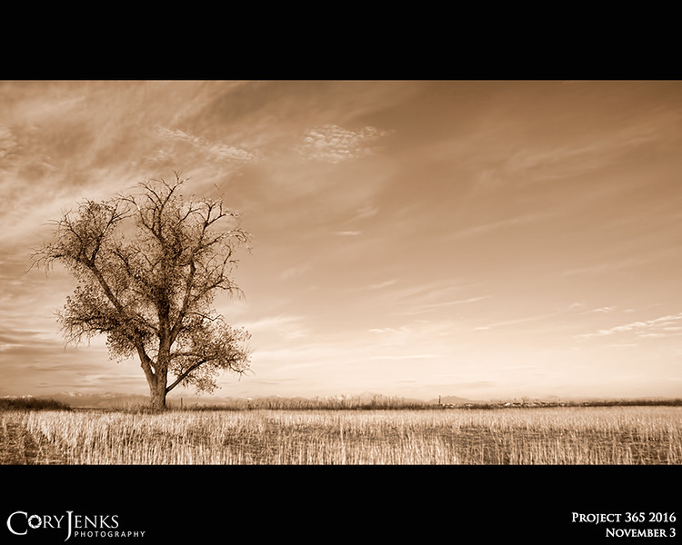 Project 365: November 3 - High Plains Tree. Stark landscape with a fall tree and the Rocky Mountains in the distant background.