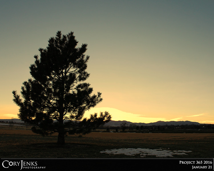 Project 365: January 21 - Evergreen at Dusk. Great silhouette of an evergreen against the Colorado sky.