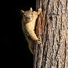 Project 365: February 17 - Smile<br /> <br /> Nothing quite like a squirrel crawling out of the shadows and stopping to pose for me.