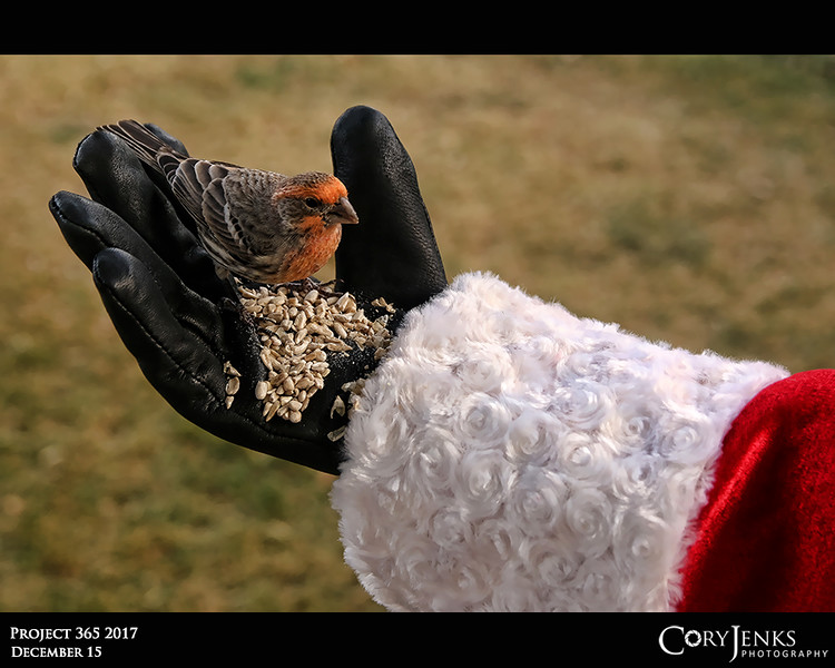 Project 365: December 15 - Santa's Helping Hand #15<br /> <br /> Santa take a few moments out of the hectic day to help feed a few of the birds that live with him at the North Pole.