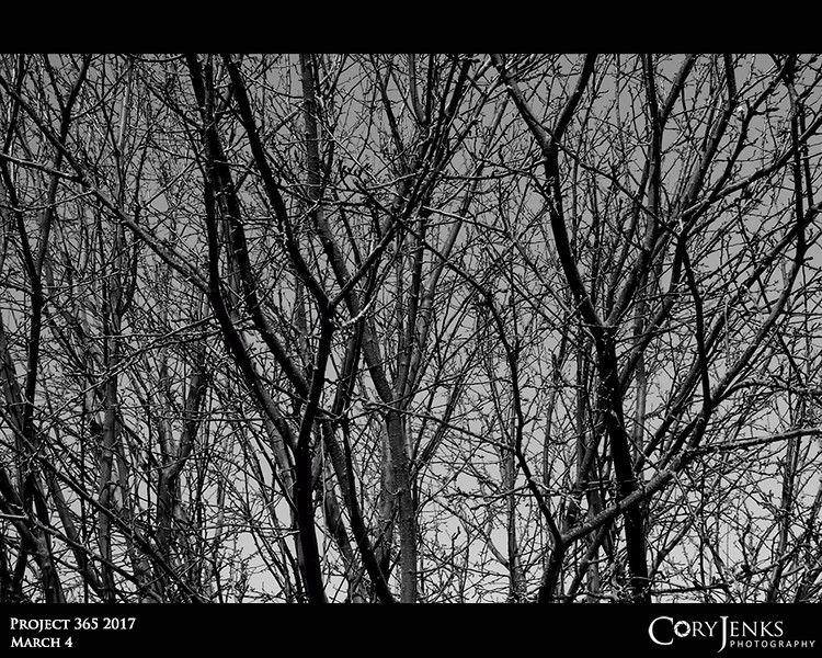 "Project 365: March 4 - Branches<br /> <br /> ""All religions, arts and sciences are branches of the same tree.""<br /> <br /> ~ Albert Einstein"