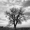 """Project 365: January 3 - Beauty or Desolation<br /> <br /> """"Circumstances in life often take us places that we never intended to go. We visit some places of beauty, others of pain and desolation.""""<br /> <br /> ~Kristin Armstrong"""