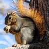 Project 365: November 18 - Squirrely <br /> <br /> The feeder with the peanuts that is supposed to attract Blue Jays also attracts the squirrels.