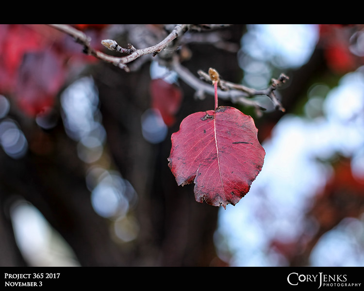 Project 365: November 3 - Red<br /> <br /> The red of some of the leaves during this time of year can be absolutely amazing.