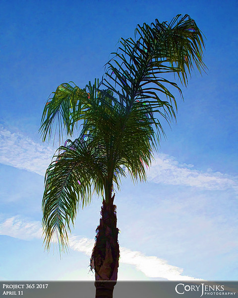 Project 365: April 11 - Simply Palm<br /> <br /> Simply a palm tree.