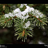 """2018 Project 365: March 28 - Spring Snow<br /> <br /> """"Kindness is like snow. It beautifies everything it covers.""""<br /> <br /> ~ Kahil Gibran"""